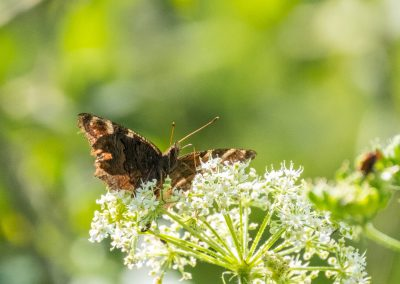 192_Schmetterling