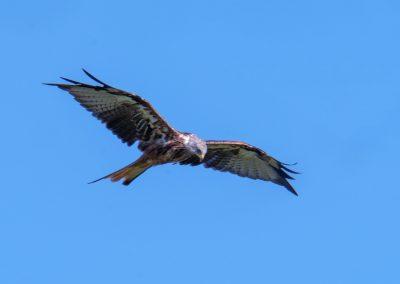 Vogelaussichtskanzeln schaffen