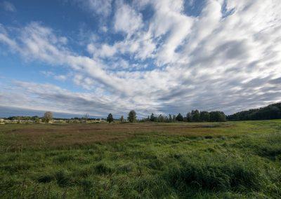 Neue Pflanzmaßnahmen auf Biotopflächen