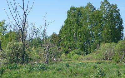 Deutsche Bundesstiftung Umwelt zu Gast in der Naturgemeinde Kettershausen